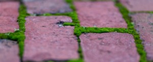 Green-Moss-and-Red-Bricks-669x272